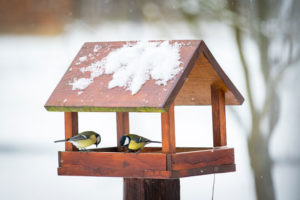 An act as simple as maintaining a birdfeeder can get you outside.